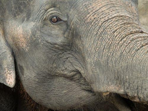 Close Up Photo of Elephants Head