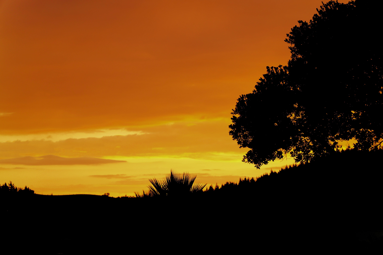 Free stock photo of sunset, night, summer, trees