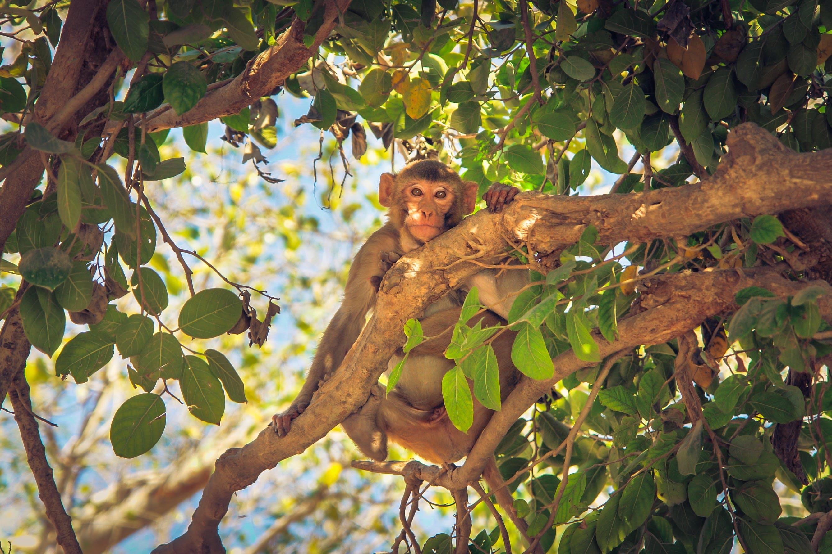 Free stock photo of nature, animal, cute, tree