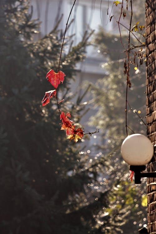 Základová fotografie zdarma na téma červené listy na slunci