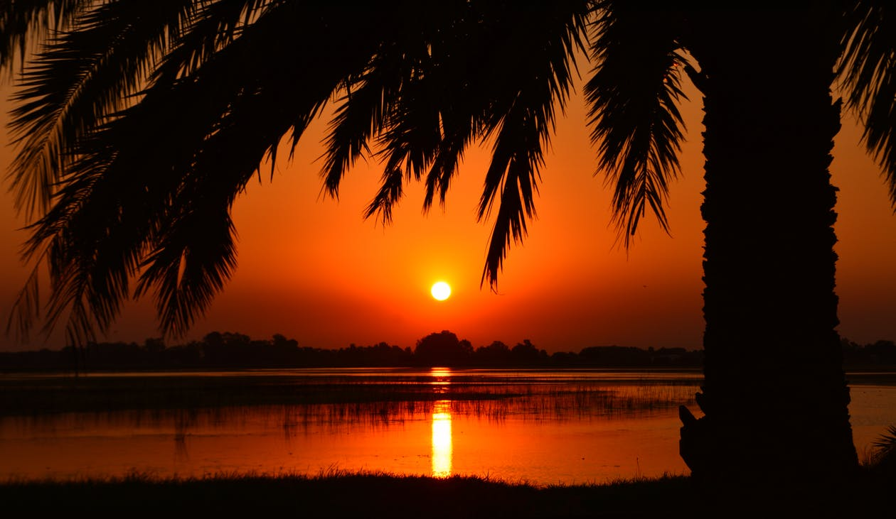 Silhouette of Palm Tree in Golden Hour Photography