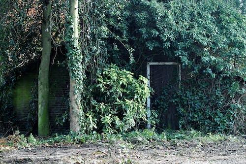 Základová fotografie zdarma na téma dům zarostlý listy