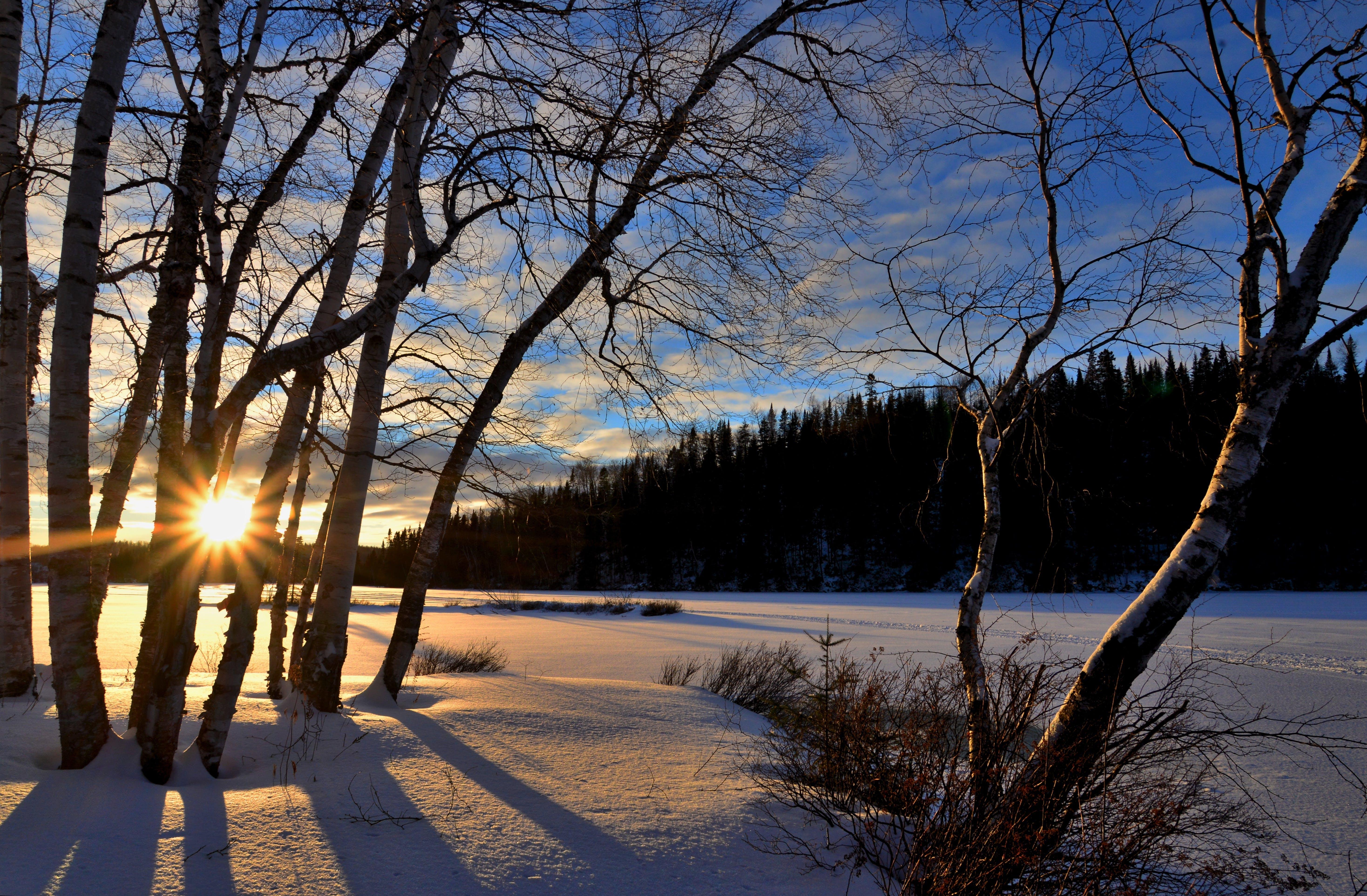 光, 公園, 冬季, 冬季景觀 的 免费素材照片