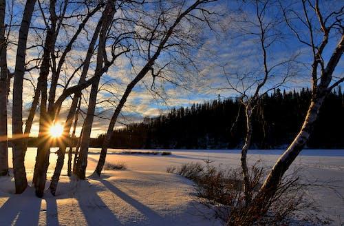 Základová fotografie zdarma na téma krajina, led, lehký, les