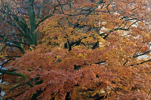 Základová fotografie zdarma na téma podzimní listí