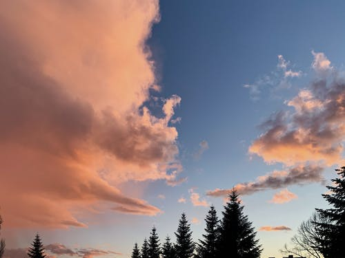 Amazing sunset over coniferous forest