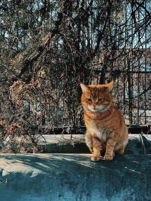 Ảnh lưu trữ miễn phí về Chân dung, con mèo, con vật, đáng yêu