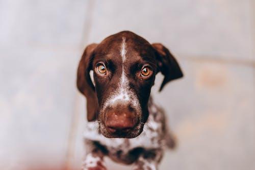 Gratis arkivbilde med dyr, hund, liten, lydighet