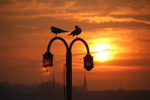 Deux Oiseaux Sur Lampadaire