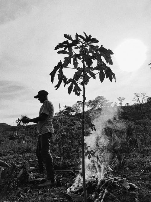 Black And White Photo Of A Man Standing Beside A Plant