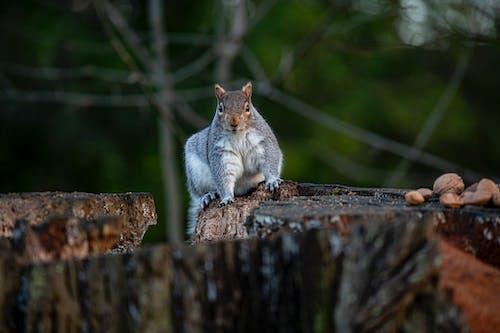 Бесплатное стоковое фото с белка, грызун, дерево, дикая природа