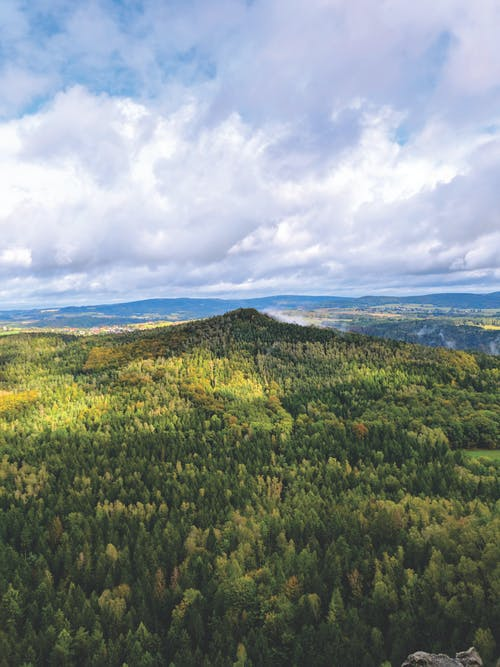 Kostenloses Stock Foto zu baum, bäume, bergwald