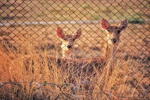 Photo of Deers Near Cyclone Fence