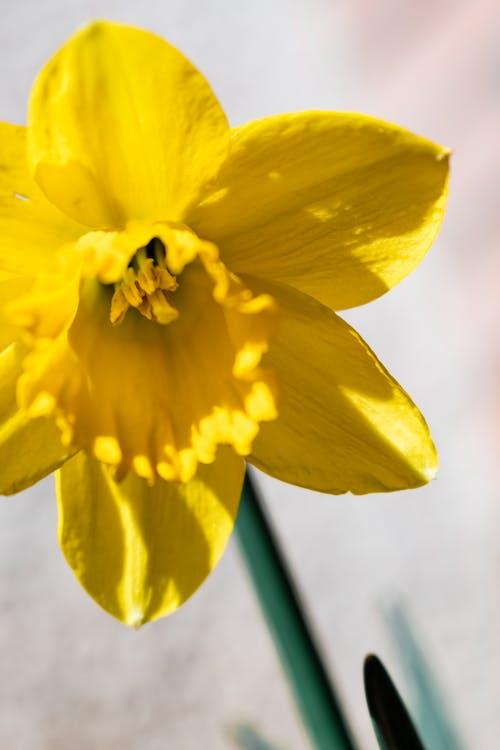 Fotos de stock gratuitas de amarillo, belleza, bonito, botánica