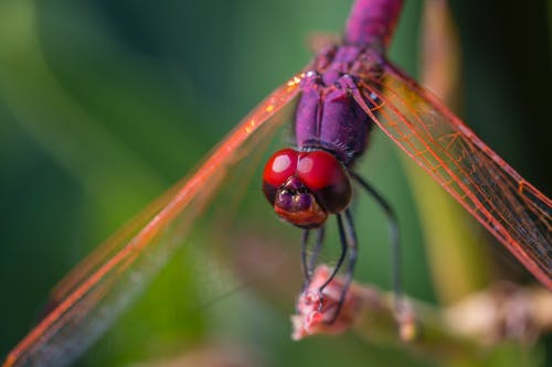 Dragonfly Perched On Brown Stem In Close Up Photography