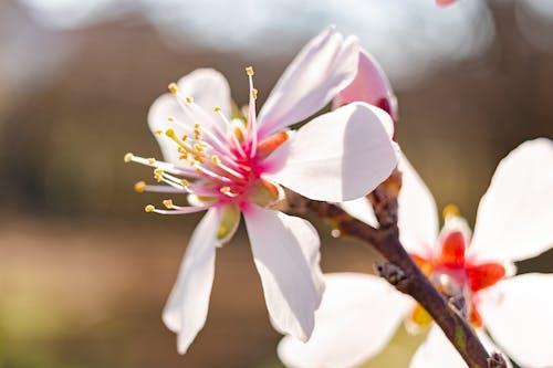 Kostnadsfri bild av april, bakgrund, blomma, blommig