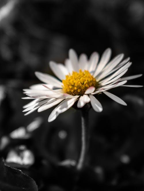 Fotos de stock gratuitas de aislado, amarillo, belleza, blanco
