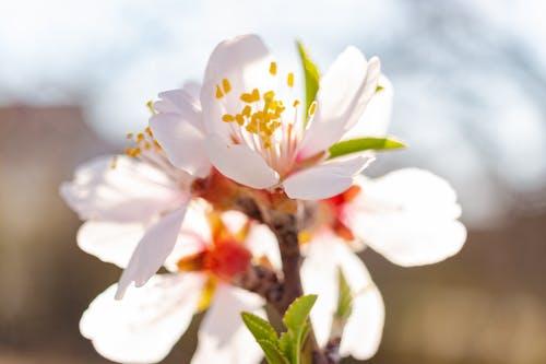 Fotos de stock gratuitas de abril, al aire libre, árbol, belleza
