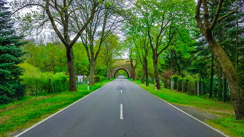 Narrow asphalt roadway with marking lines and arched tunnel far away between colorful trees with thick trunks and green grass in rural zone