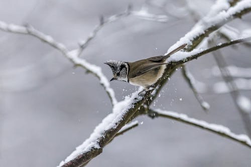 Brown and White Bird on Tree Branch Covered With Snow