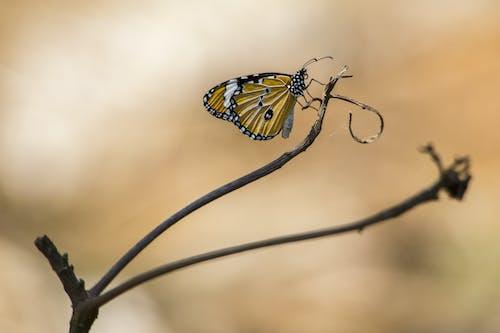 亞洲, 動物, 宏觀, 小蟲 的 免費圖庫相片