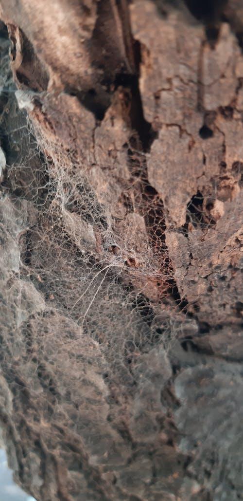 Free stock photo of bark, spider web, tree bark