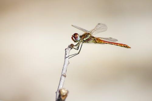 böcek, Estonya, hayvan, kırmızı damarlı damla içeren Ücretsiz stok fotoğraf