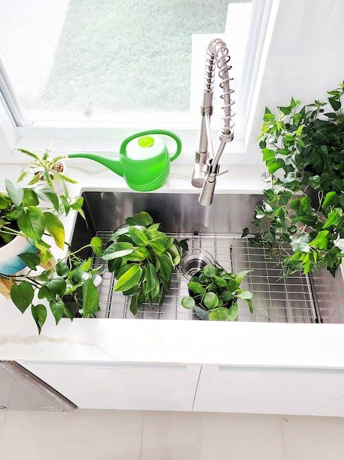 Free stock photo of dark green plants, decorative plant, garden plant