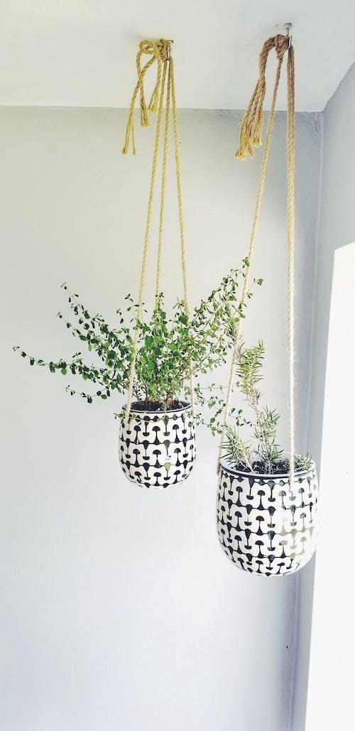 Free stock photo of garden plant, herbs, medicinal herbs