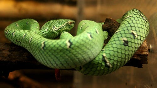 Free stock photo of green, reptile, snake