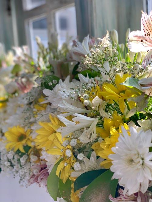 花, 花卉 的 免费素材图片