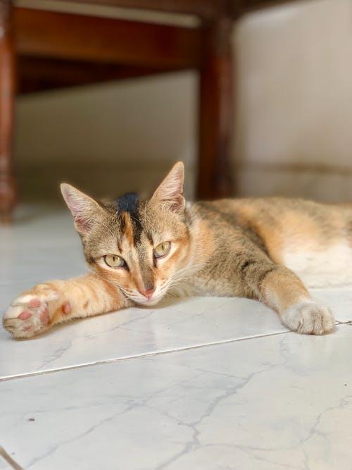貓 的 免费素材图片