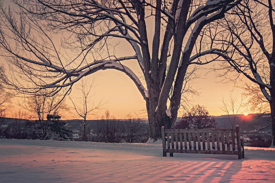 branches, dawn, dusk
