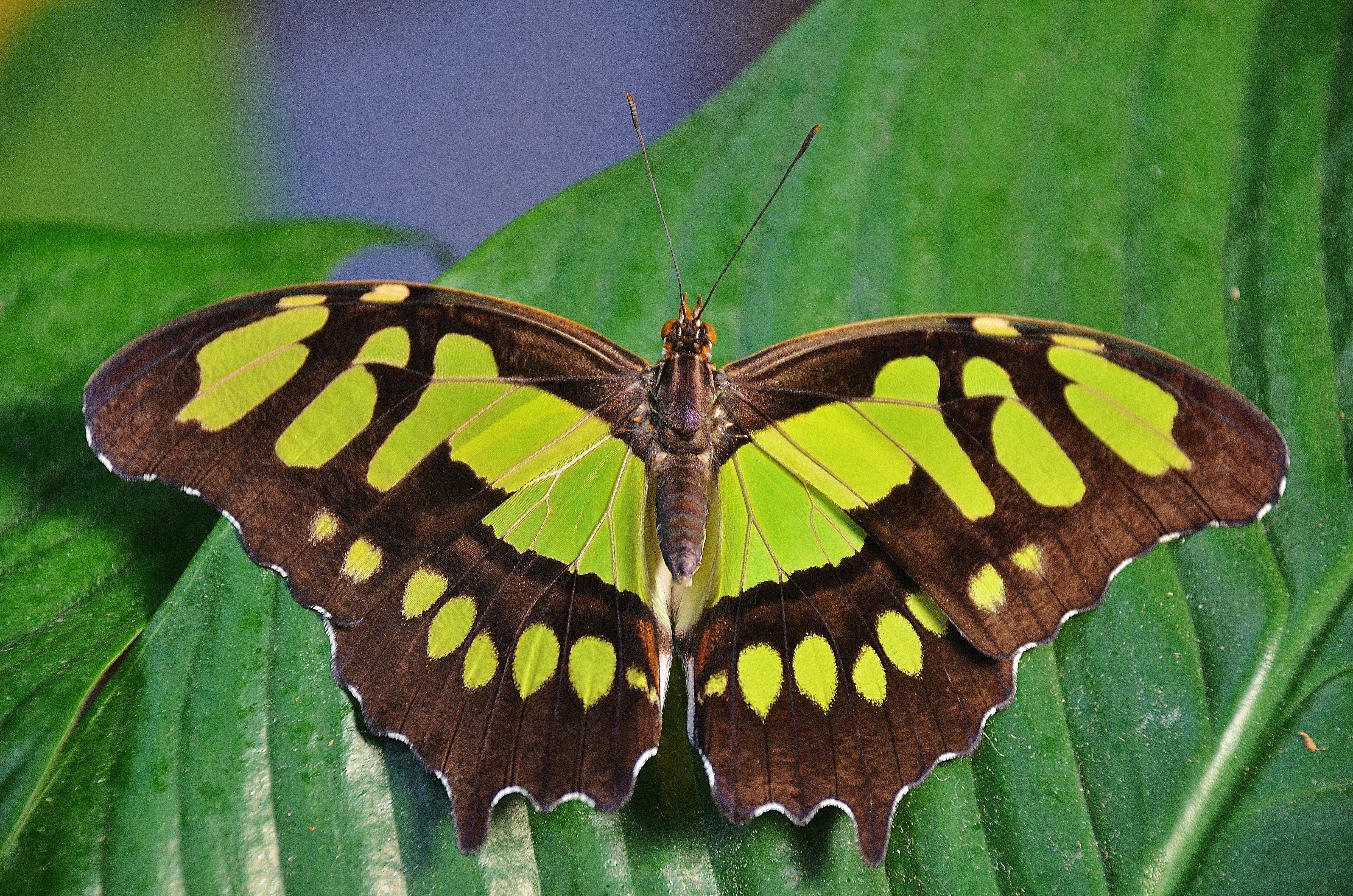 Closeup Photography of Brown and Yellow Butterfly Perching on Green Leaf