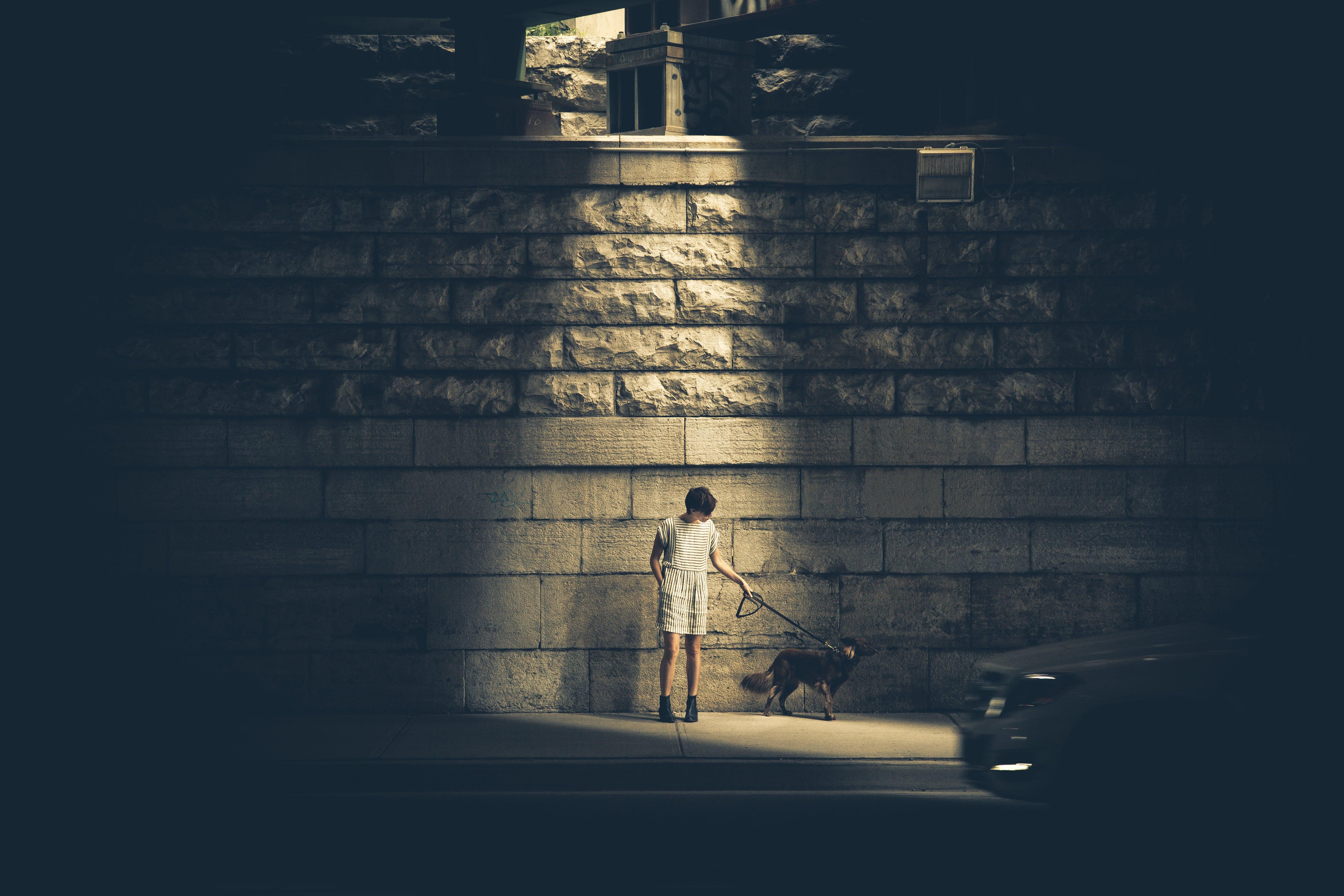 Man Walking With German Shepherd Outdoor