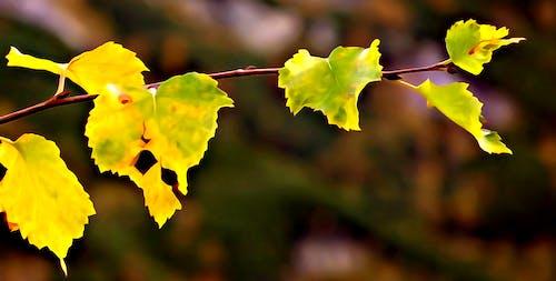 秋季 的 免費圖庫相片