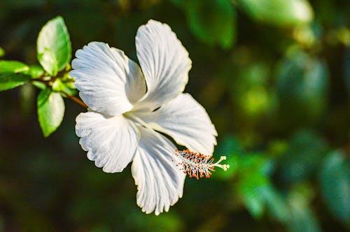 Blaue Blume In Tilt Shift Lens