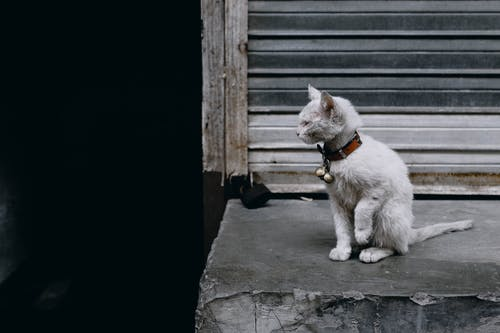 White Cat Sitting on Gray Concrete Floor