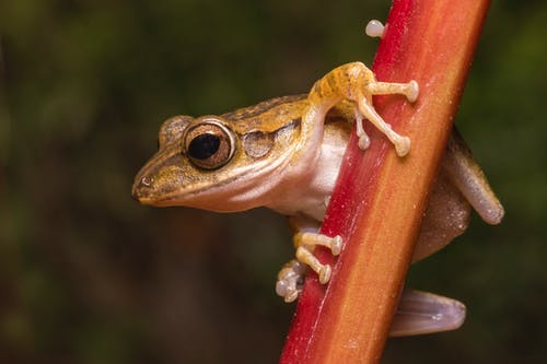 Brown Frog on Brown Wooden Fence