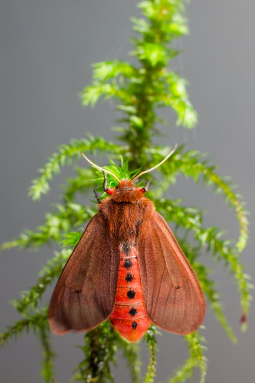Brown Moth Perched on Green Plant