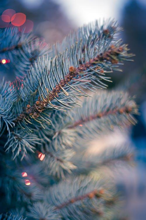 Бесплатное стоковое фото с блестеть, ветвь, вечнозеленый, декорация