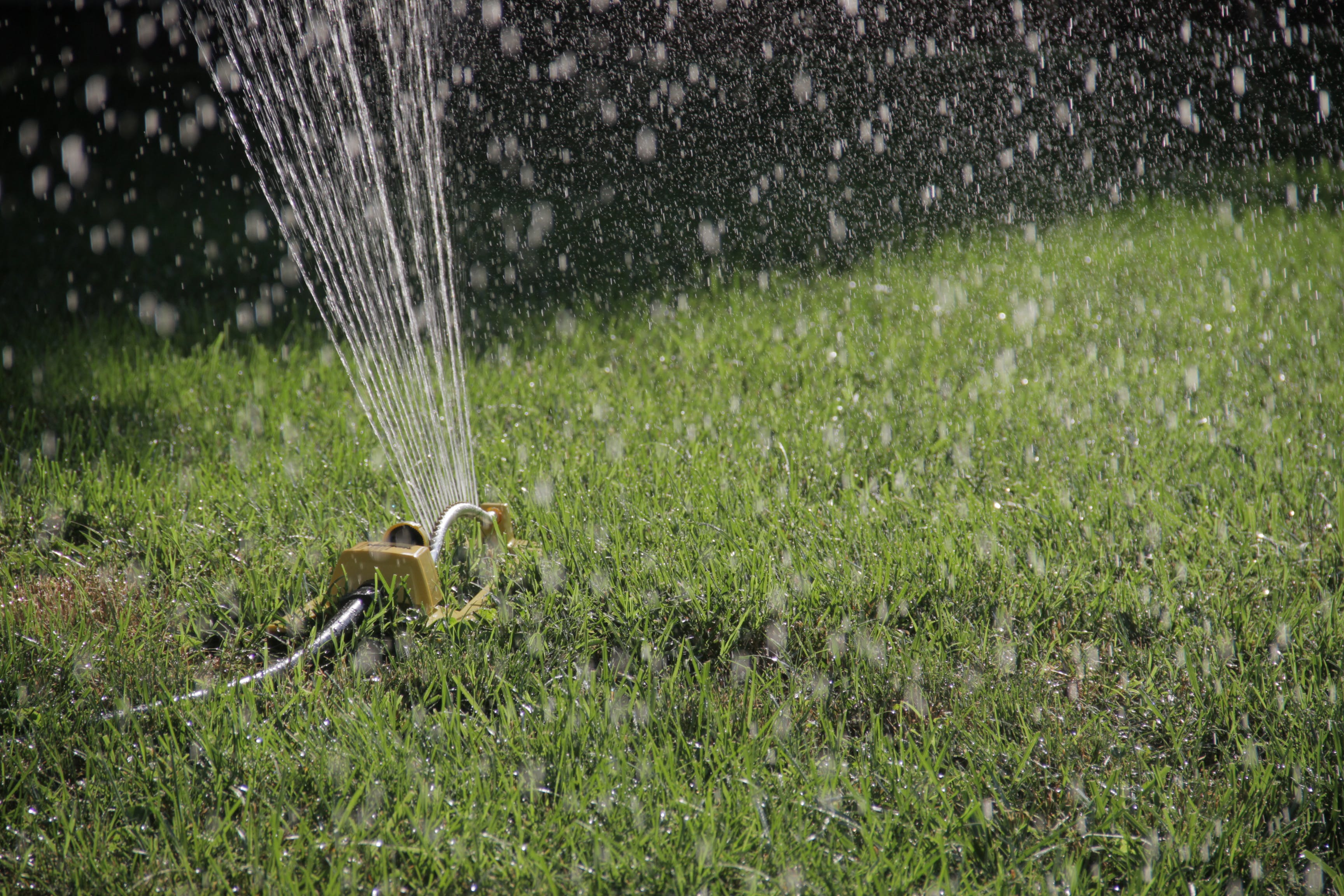 Free stock photo of grass, lawn, sprinkler, watering