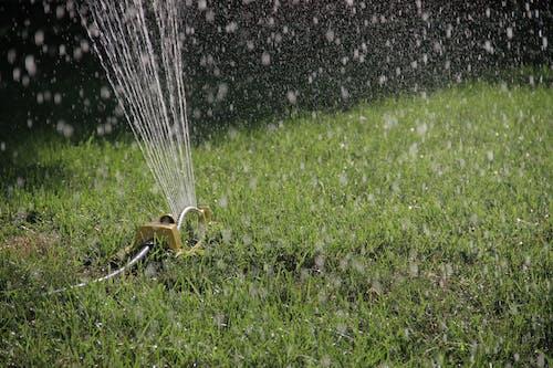 Foto profissional grátis de aspersor, grama, gramado, rega