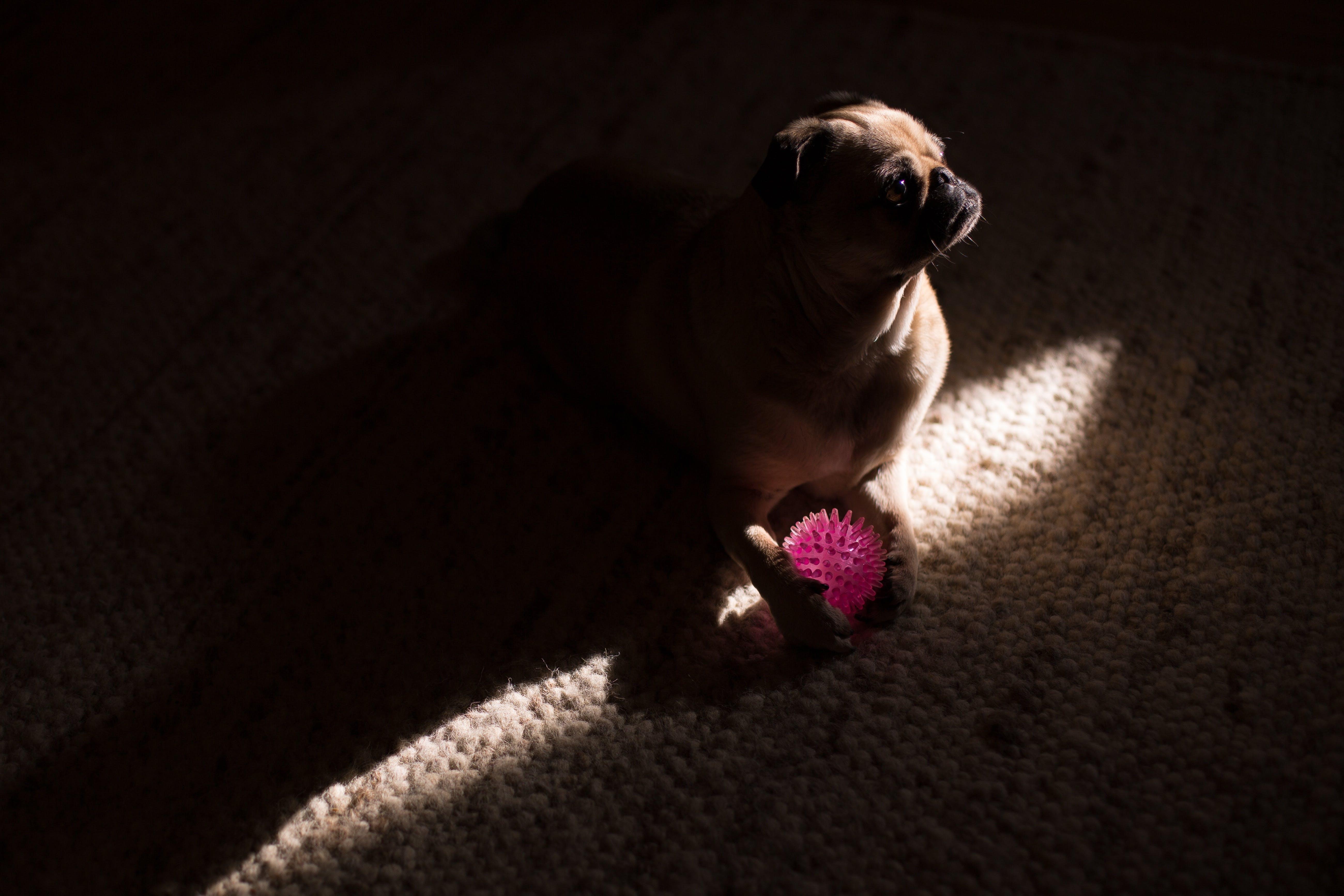 çok sevimli, doğurmak, Evcil Hayvan, hayvan içeren Ücretsiz stok fotoğraf