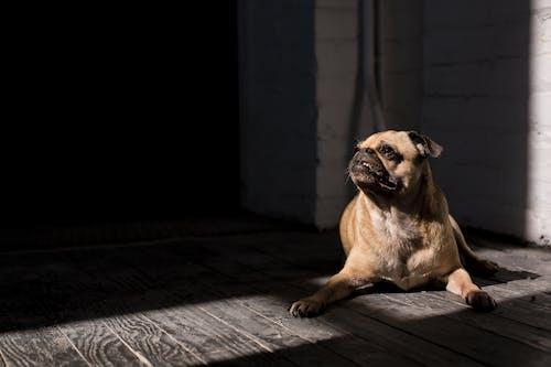 動物, 動物攝影, 可愛, 寵物 的 免费素材照片