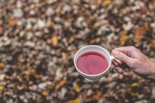 Free stock photo of caffeine, cup, mug, drink