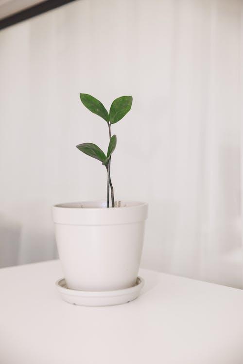 Gratis arkivbilde med blad, blomst, bord, dekorativ plante