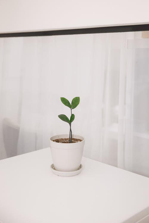 Green Plant on Table