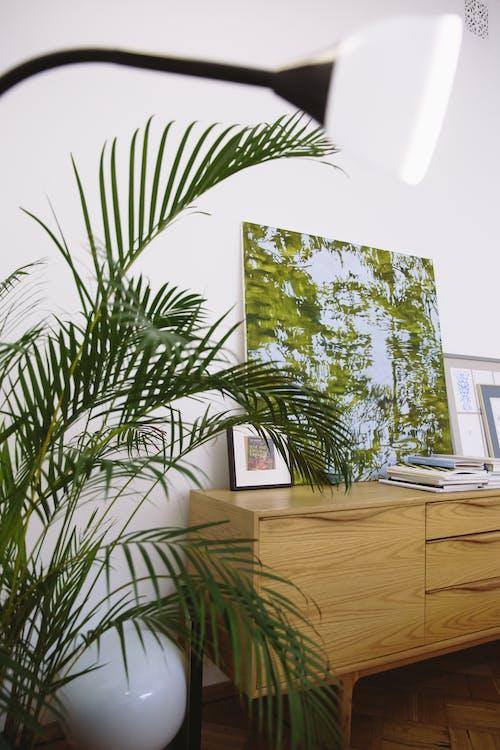 Plante Verte à Côté Du Meuble En Bois