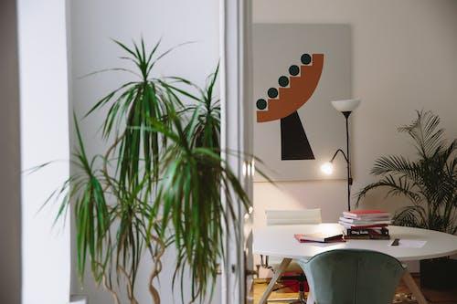 Green Plant Beside White Table